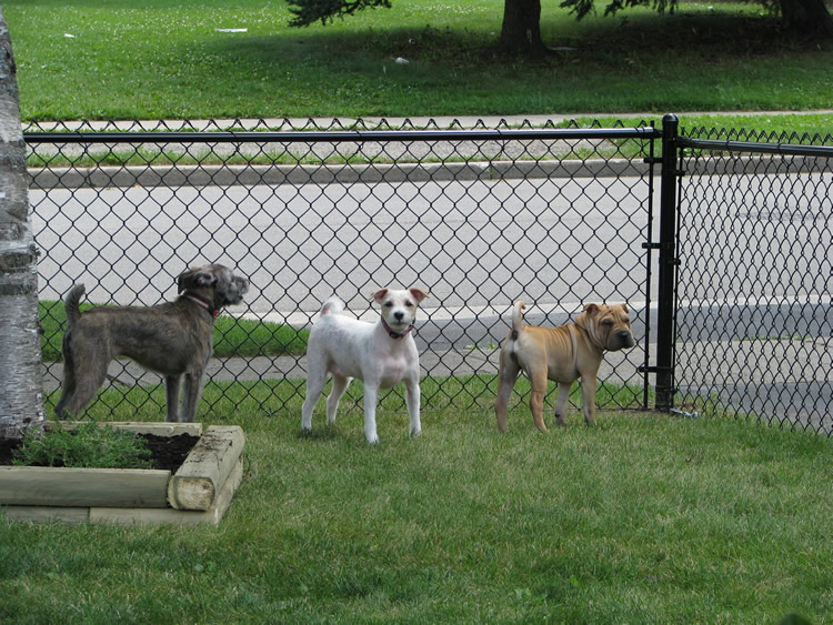 Residential Chain Link Fence #11