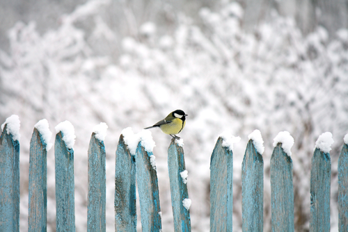 wooden fence covered in snow